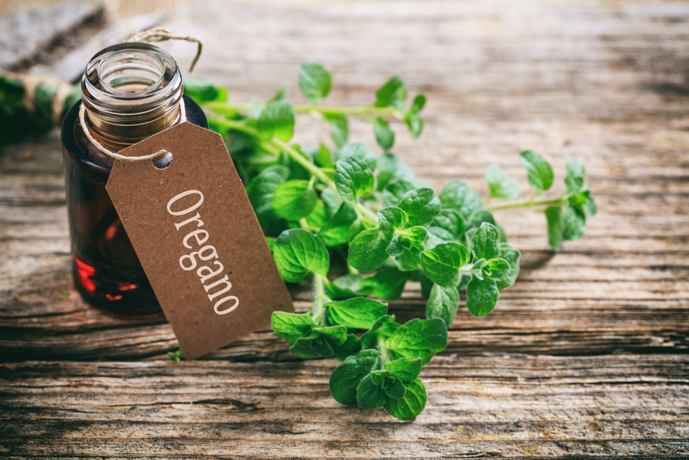 Oregano oil for tooth pain